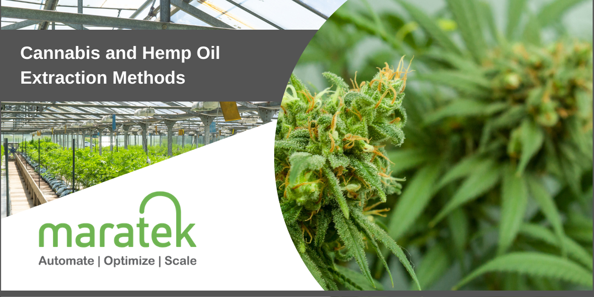 Cannabis and Hemp Oil Extraction