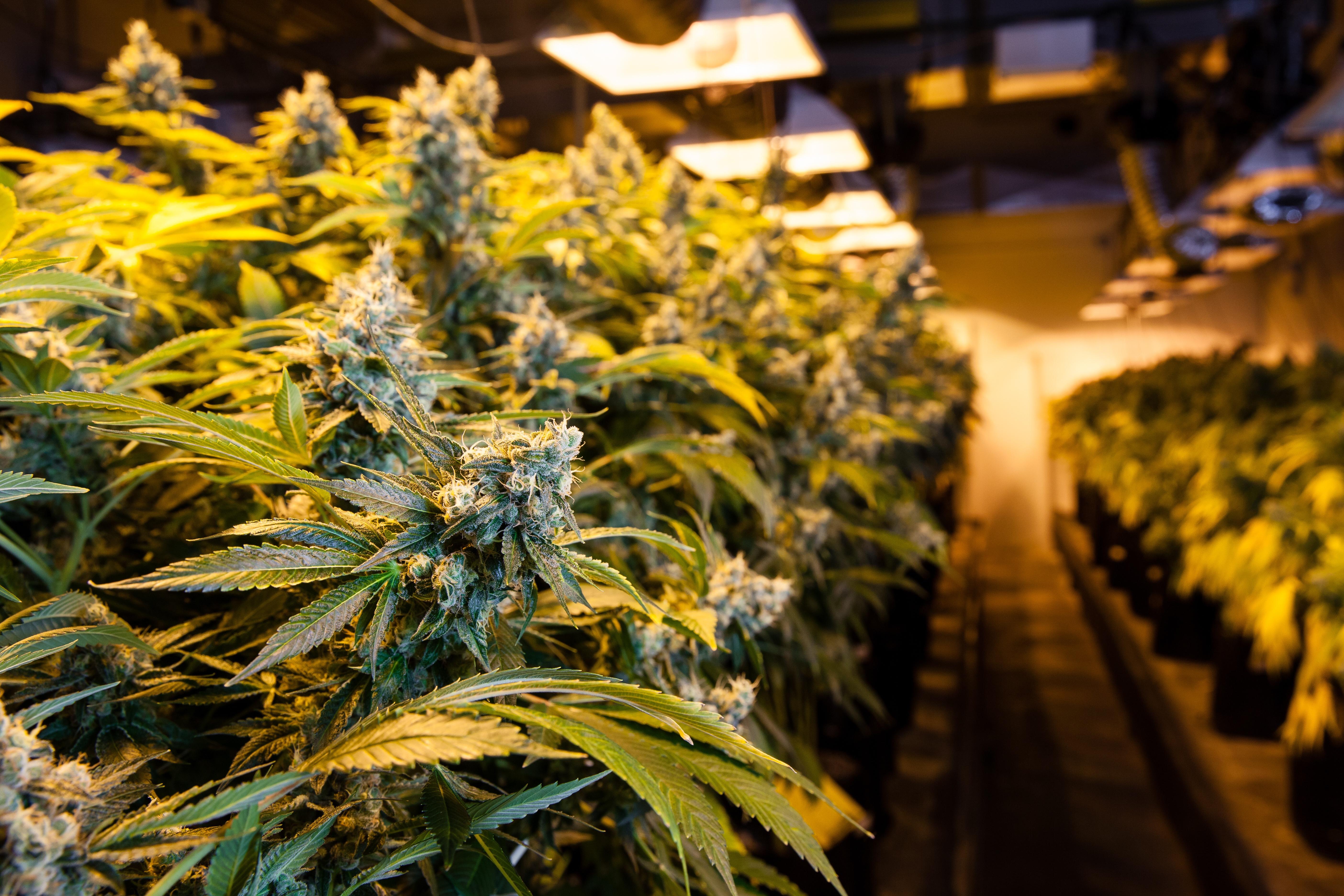 Cannabis Marijuana Hemp Oil Recycling & Recovery