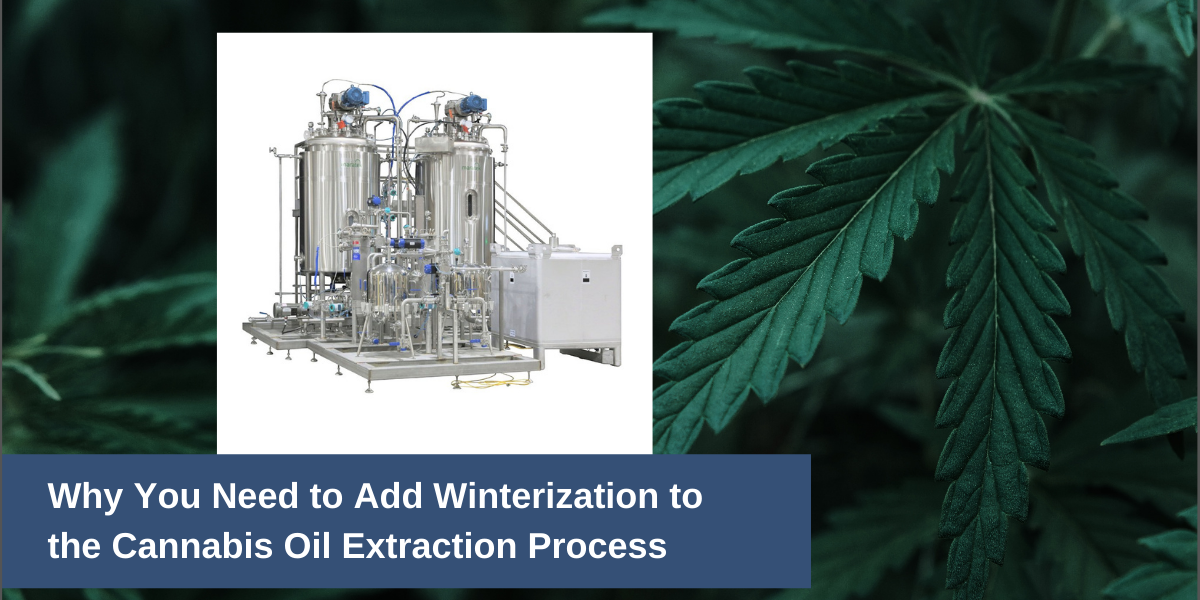 Cannabis Winterization Process