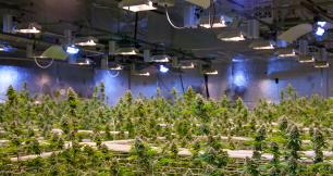 Cannabis  / Hemp Oil Extraction Facility